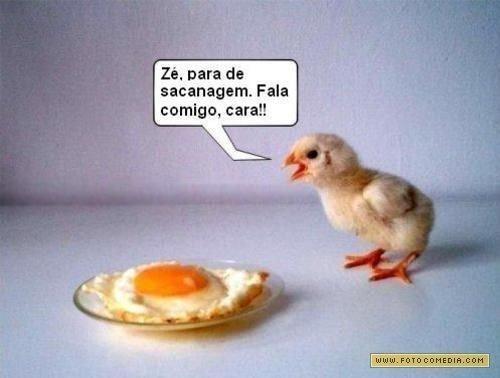 piada_do_pintinho-1001